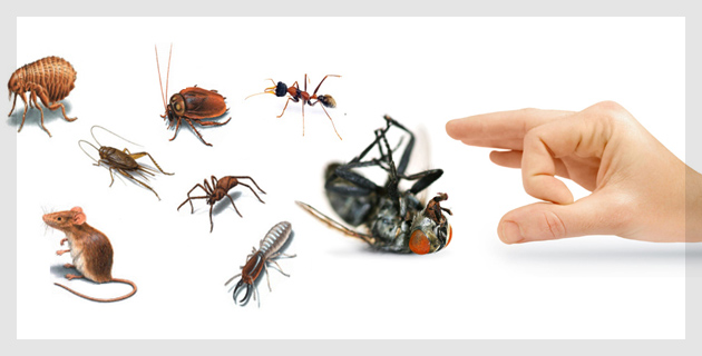 Pests Control Services